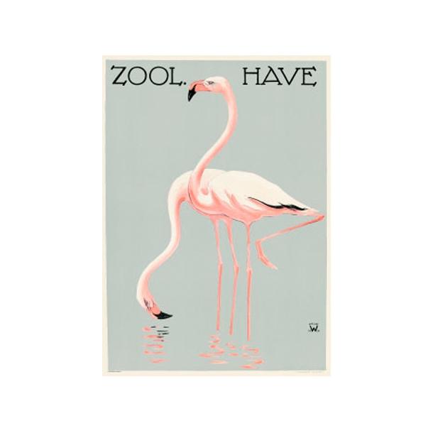 Flamingoer