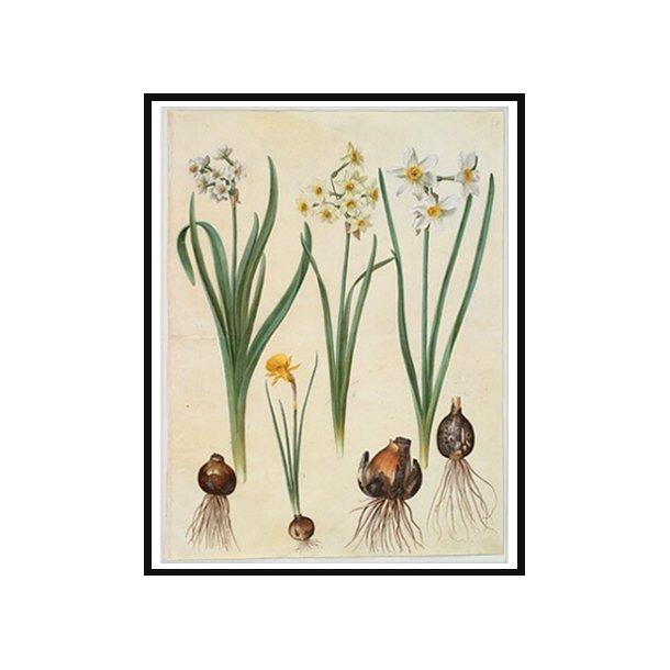 Holtzbecker, Blomstermotiv 2