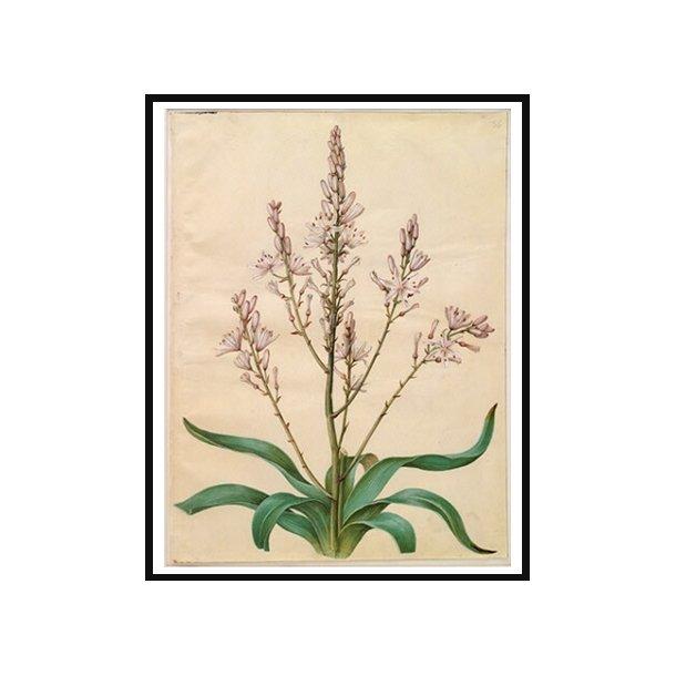 Holtzbecker, Blomstermotiv 4