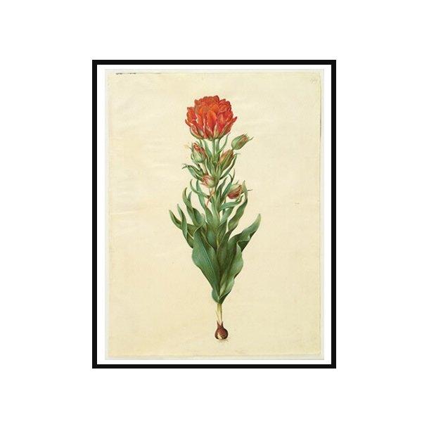 Holtzbecker, Blomstermotiv 5