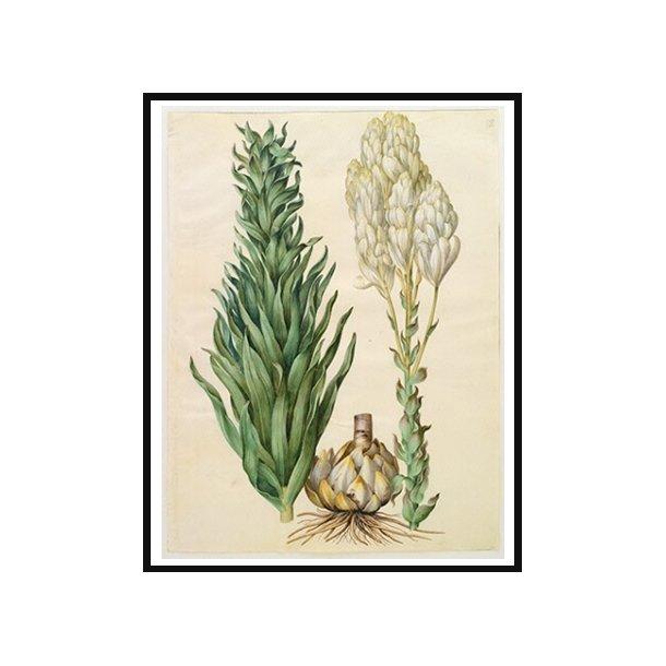 Holtzbecker, Blomstermotiv 8