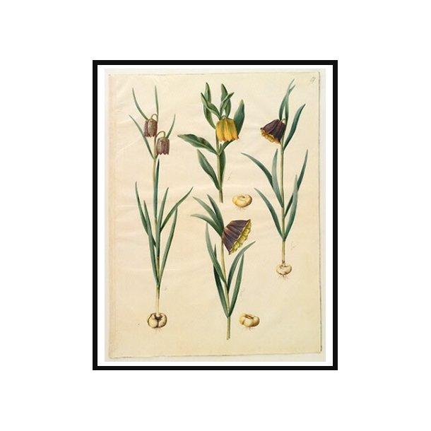 Holtzbecker, Blomstermotiv 10