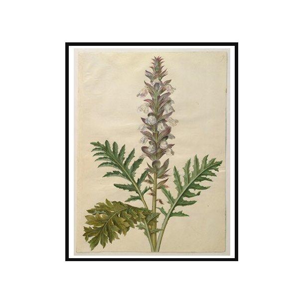 Holtzbecker, Blomstermotiv 11