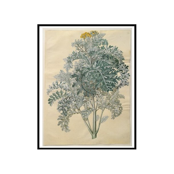 Holtzbecker, Blomstermotiv 12