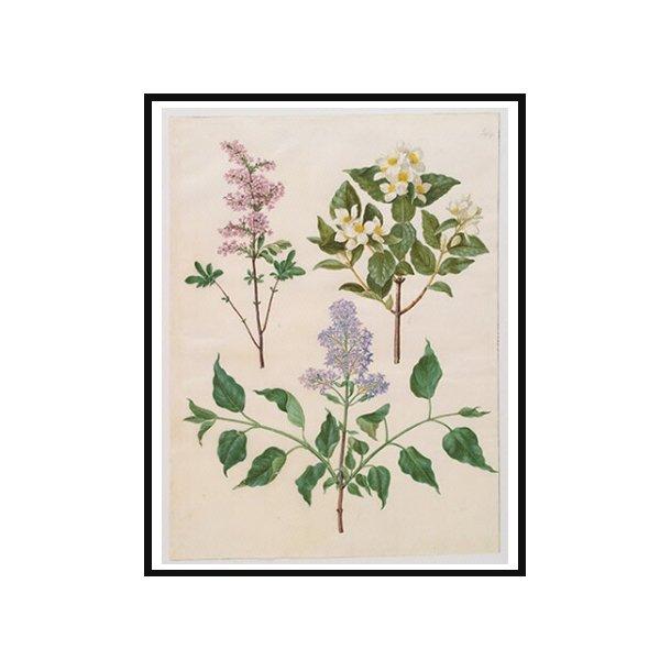 Holtzbecker, Blomstermotiv 16