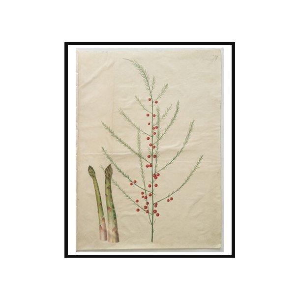 Holtzbecker, Blomstermotiv 19