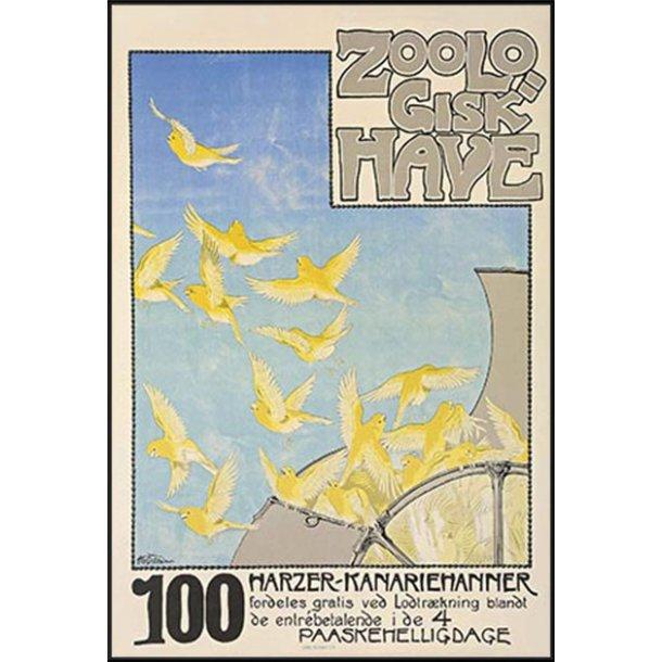 Z 29. - Zoo, Kanariefugle