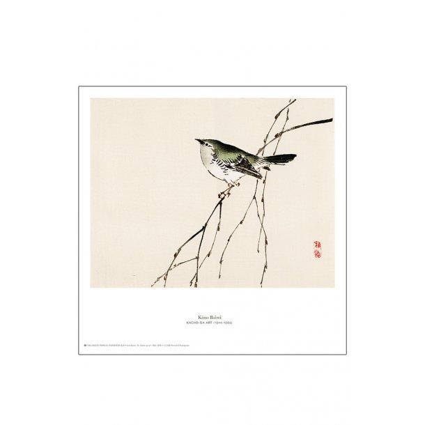 Kōno Bairei. Japansk træsnit m. fugl
