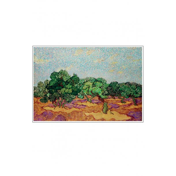 Oliventræer – Vincent Van Gogh