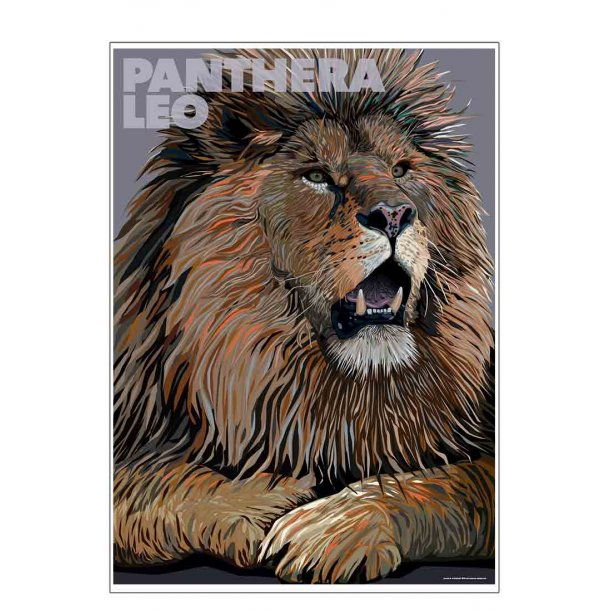 Panthera – Leo