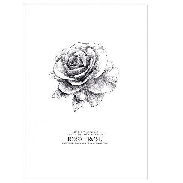 Skitse af rose