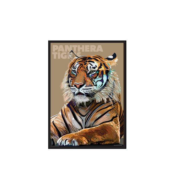 Panthera – Tigris M/1