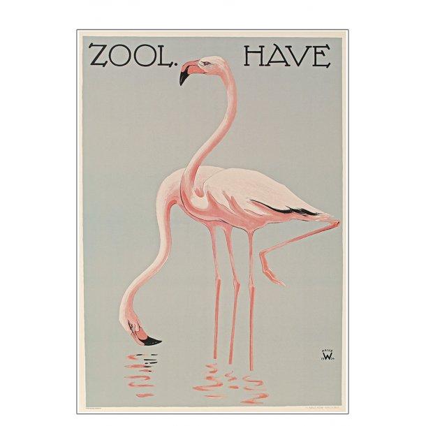 Z 2. - Zoo - A - Wennerwald, Flamingoer