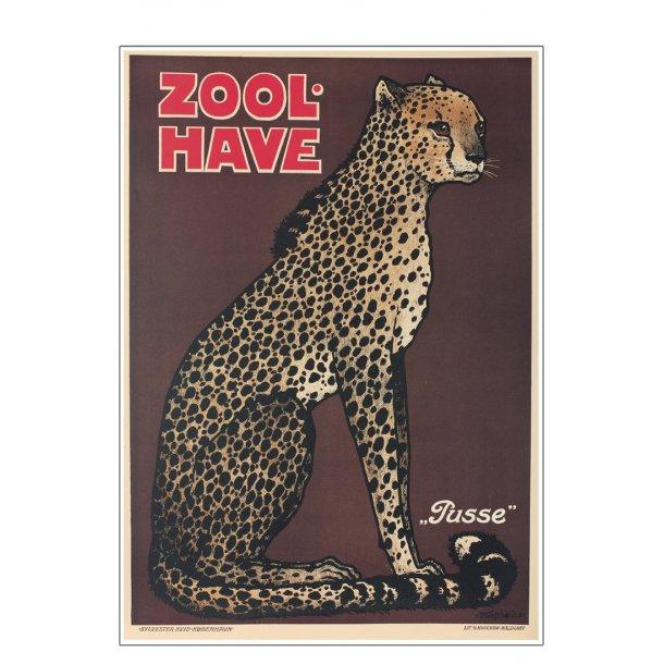 Z 14. - Zoo - Geparden - pusse
