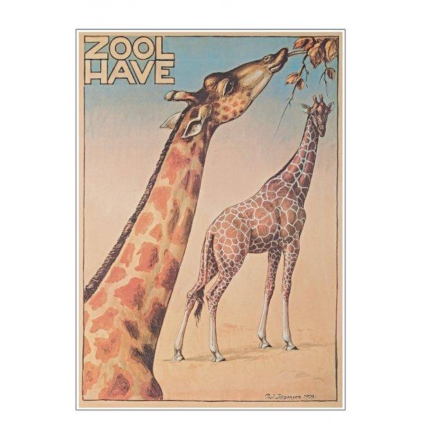 Z 8. - Zoo - Jørgensen, Giraf-1