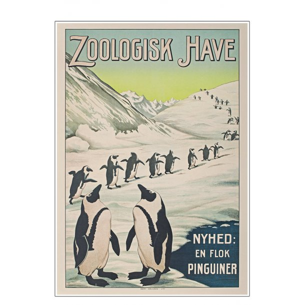 Z 12. - Zoo - Pingvin
