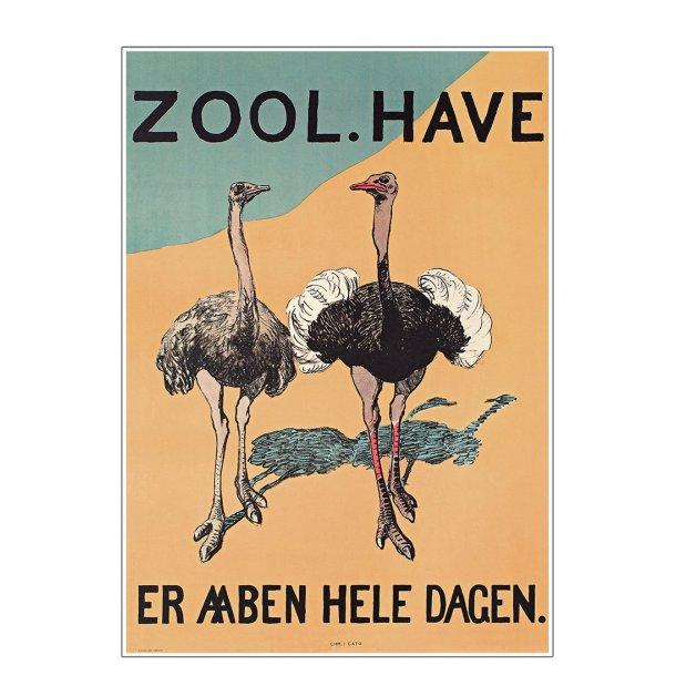 Z 16. - Zoo - Struds
