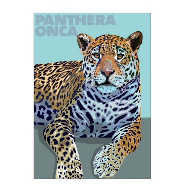 Panthera – Onca