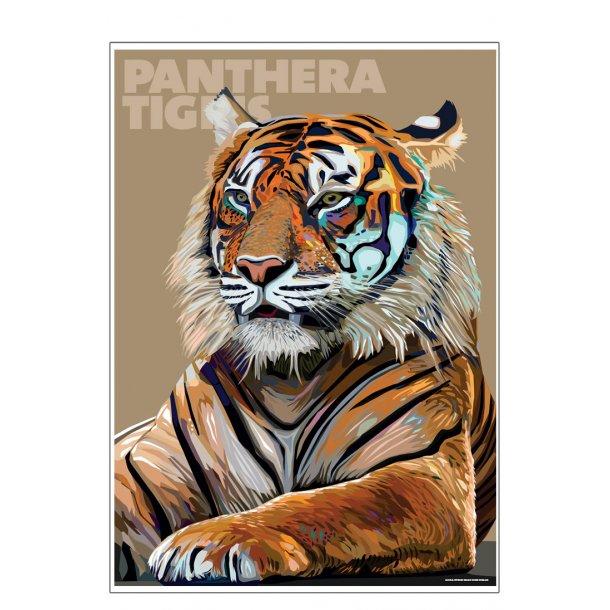 Panthera – Tigris
