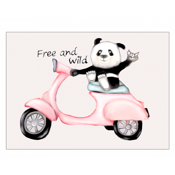 Panda på scooter - Plakat med dyr