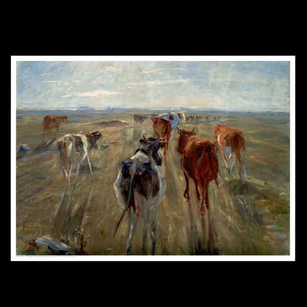 Philipsen, Kvæg på Saltholm
