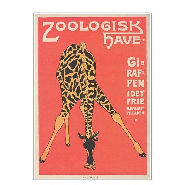 Z 10. - Zoo - Giraf -3