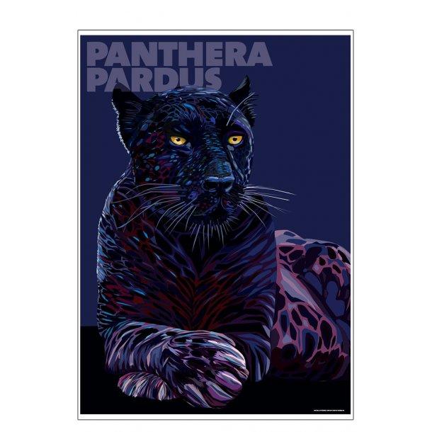 Panthera – Pardus