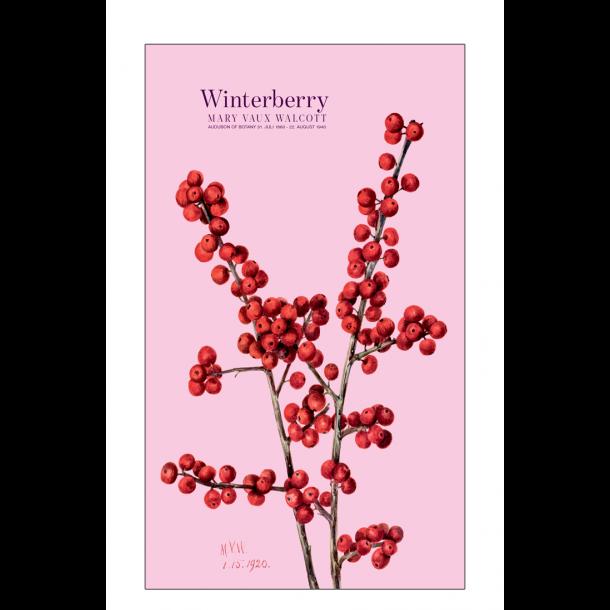 Winterberry. Rose